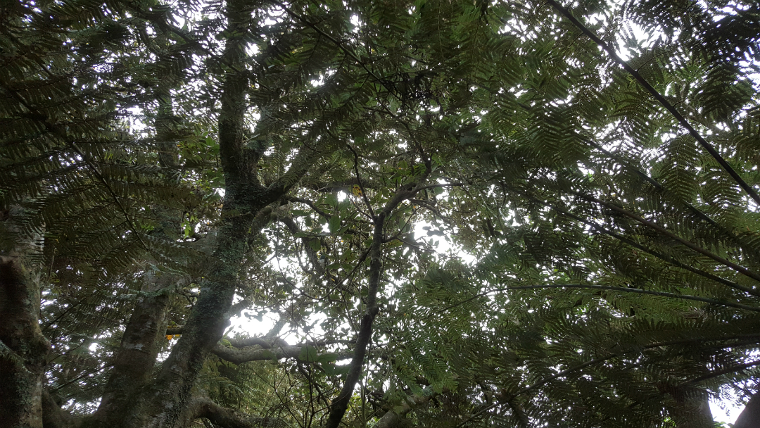 Watching and listening under the native canopy was great - try spot the fat wood pigeon!